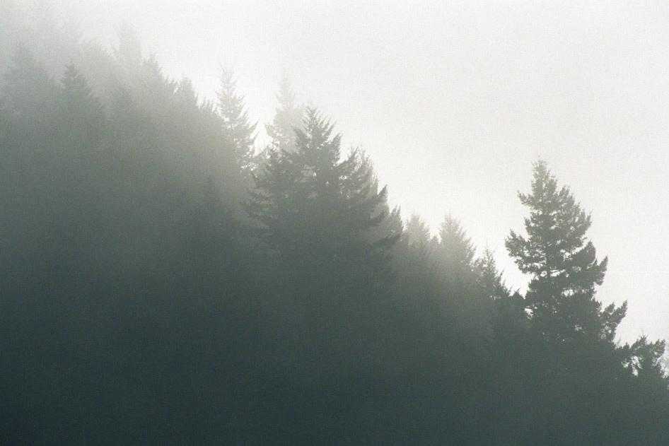 nature0005