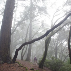 Traveller in the mist
